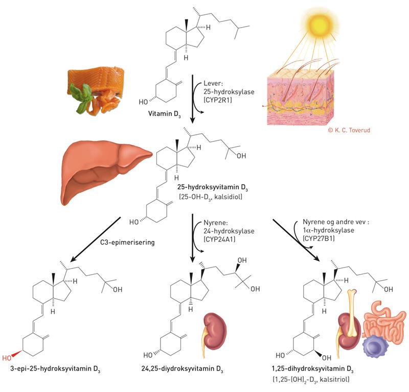 d vitamin effekt