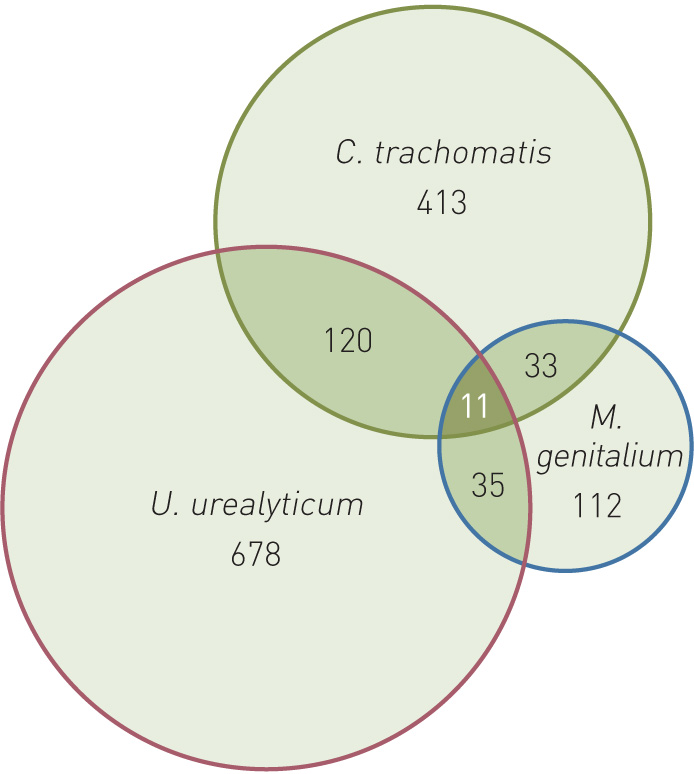 Mycoplasma prostatitis