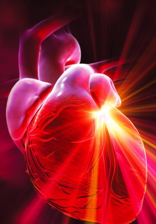 эркер картинка сердце не билось называет себя строгой